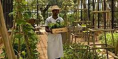 Babylonstoren gardener in garden