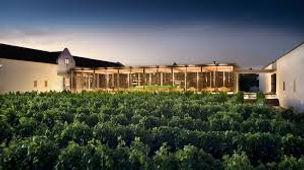 Babylonstoren Vineyard