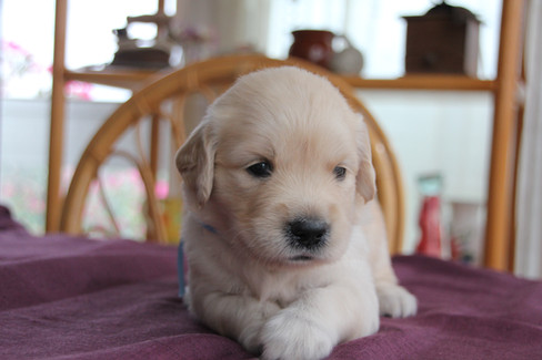 Cachorros con 23 días