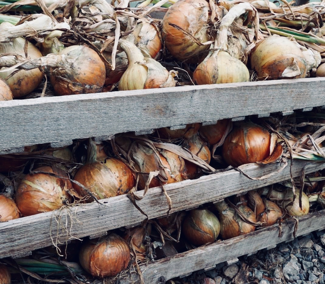 Hungerford Park Onions