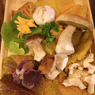 Selection of local mushrooms