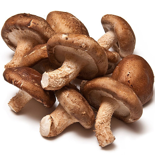 Shiitake Medium