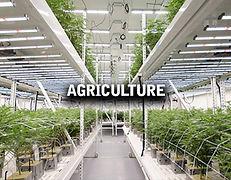 agriculture1.jpg