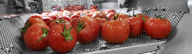 Tomato%20processing_edited.jpg