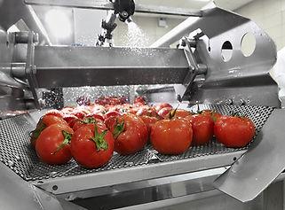 Tomato Processing.jpg