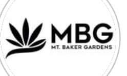 Custom MBG Light