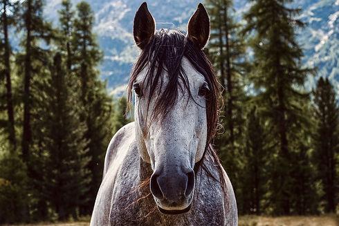horse-5836459_960_720.jpg