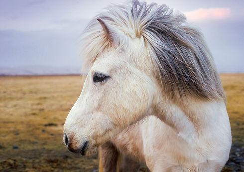 pony-2235916_960_720.jpg