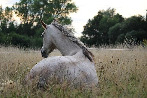 horse-905534_960_720.jpg