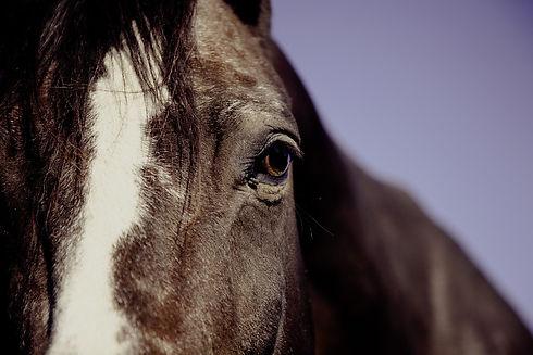 horse-594191_960_720.jpg