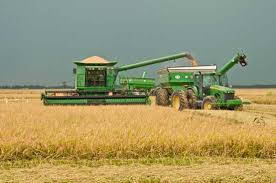 Farmers Speed up Harvest to Beat Rain Predictions