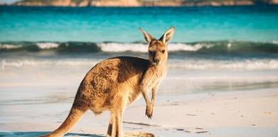 kangaroo-island-australia-1512549504-390