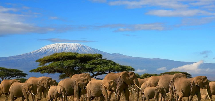 Amboseli-national-Park.jpg