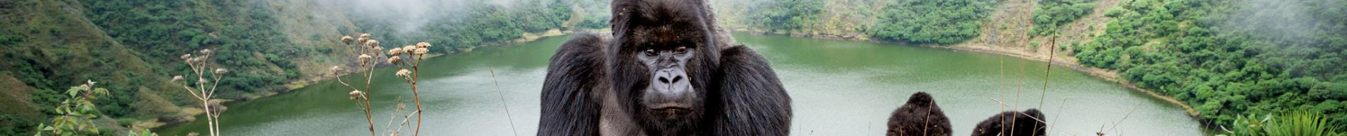9 Days, Gorillas & Beyond.jpg