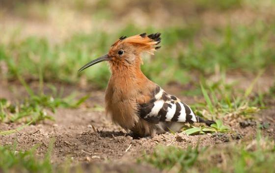 amboseli-national-park-bird-in-the-grass
