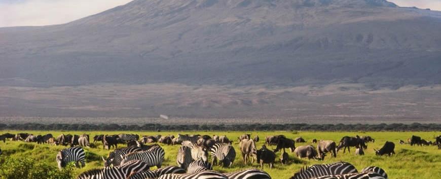 Amboseli-Zebras.jpg