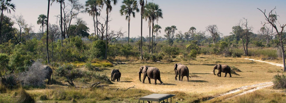 Herd-of-Elephants-walking-while-guests-c