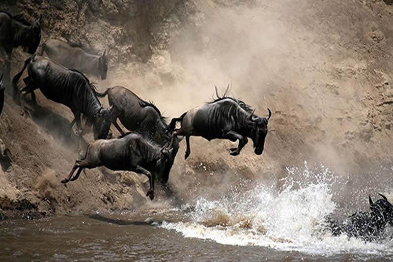 mara-migration.jpg