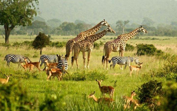 Wildlife-Uganda-720x450.jpg