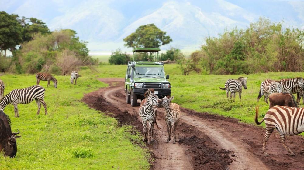 12 Days , Serengeti Trail Safari.jpg
