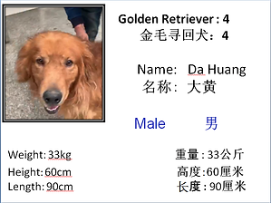 4 - Da Huang.png