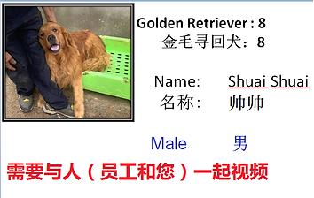 8 - Shuai Shuai.png