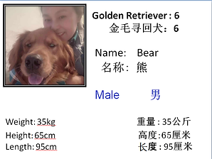 6 - Bear.png