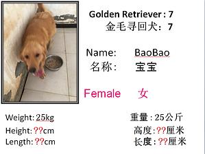 7 - Bao Bao.png
