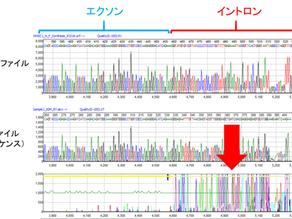 mRNAのcDNAシーケンスデータを解析するためのリファレンスGenBankファイルを作成する