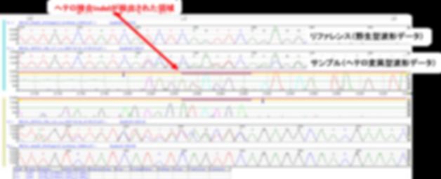 Mutation Surveyor ヘテロ接合 バリアント CRISPR Cas9