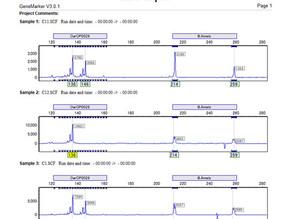 アレルレポートのエレクトロフェログラムの表示範囲