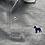 Thumbnail: Polo gris