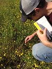 Ervin Lab: Plant Ecology, Invasive Species Ecology, Wetland Ecology
