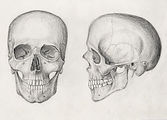How-To-Draw-a-skull-realistic.jpg