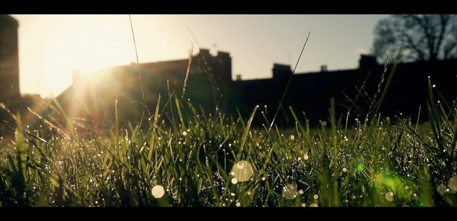Morning Dew   Tanner Park