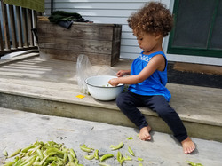 Fresh peas from the garden