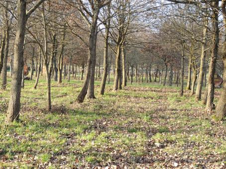 La forêt prête pour le Printemps