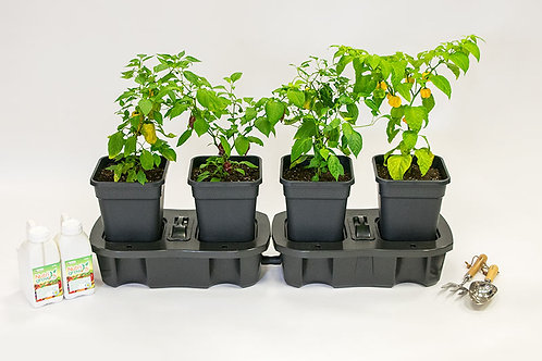 Set of 2 x Quadgrow