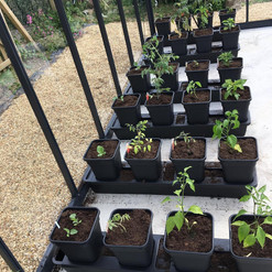 IG - Quadgrow Peppers Tomatoes Melon - D