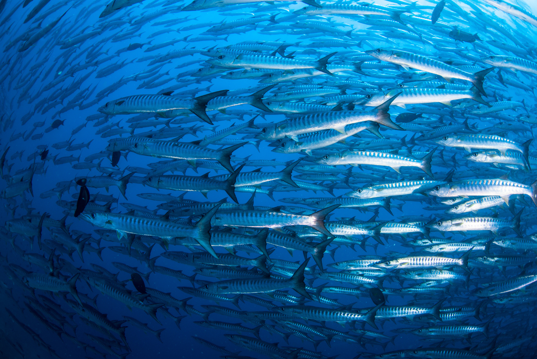 Barracuda and/or San Juan Reefs
