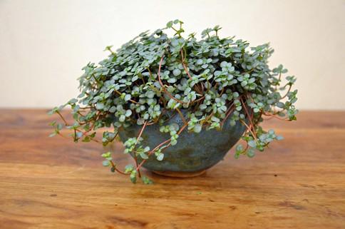 Plant Pot 2.jpg