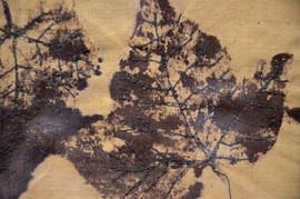 Textile Prints 6.jpg