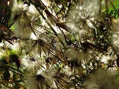flores Antonio .JPG