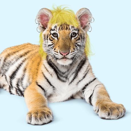 Baby tiger resembling Tiger King Joe Exotic.