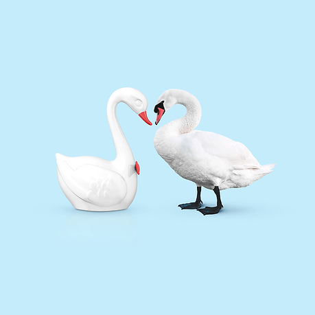 A porcelain swan facing a real swan.