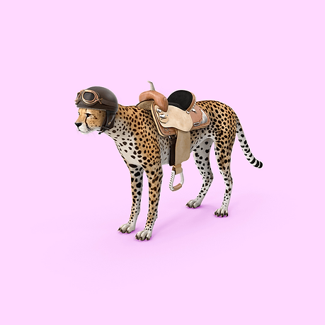 Cheetah with a saddle.