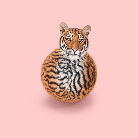Tiger BB-8.png