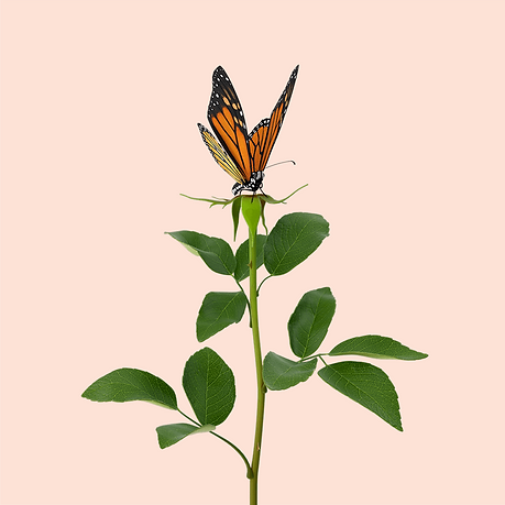 Butterfly_Flower.png