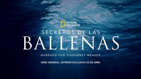 """NATIONAL GEOGRAPHIC PRESENTA SU NUEVA SERIE ORIGINAL """"SECRETO DE LAS BALLENAS"""", ESTRENO 22 DE ABRIL"""