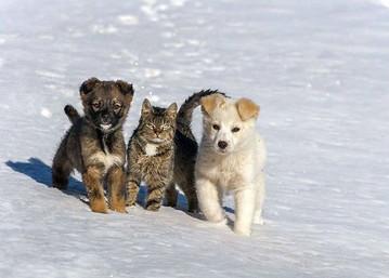cachorrines1.jpg
